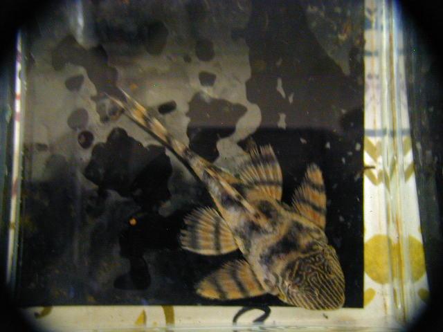 20070328-1.jpg