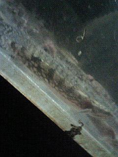 20091125-2.jpg